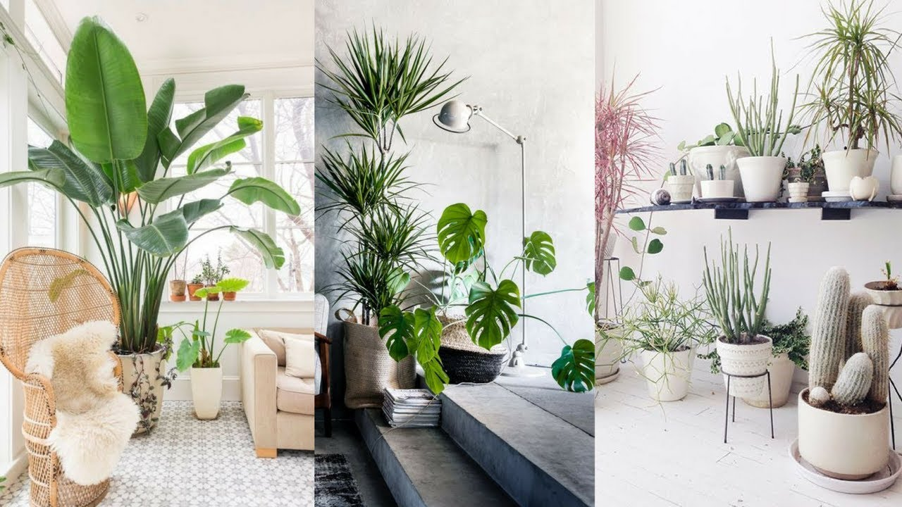 25+ best indoor plants ideas - simple ways to decorate with houseplants CHRWYEJ