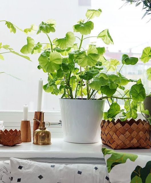 4 best indoor plants for apartments FSXMVIH