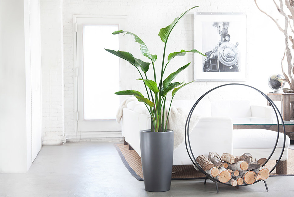 best indoor plants for apartments 10 best indoor plants for men XYUDCMI