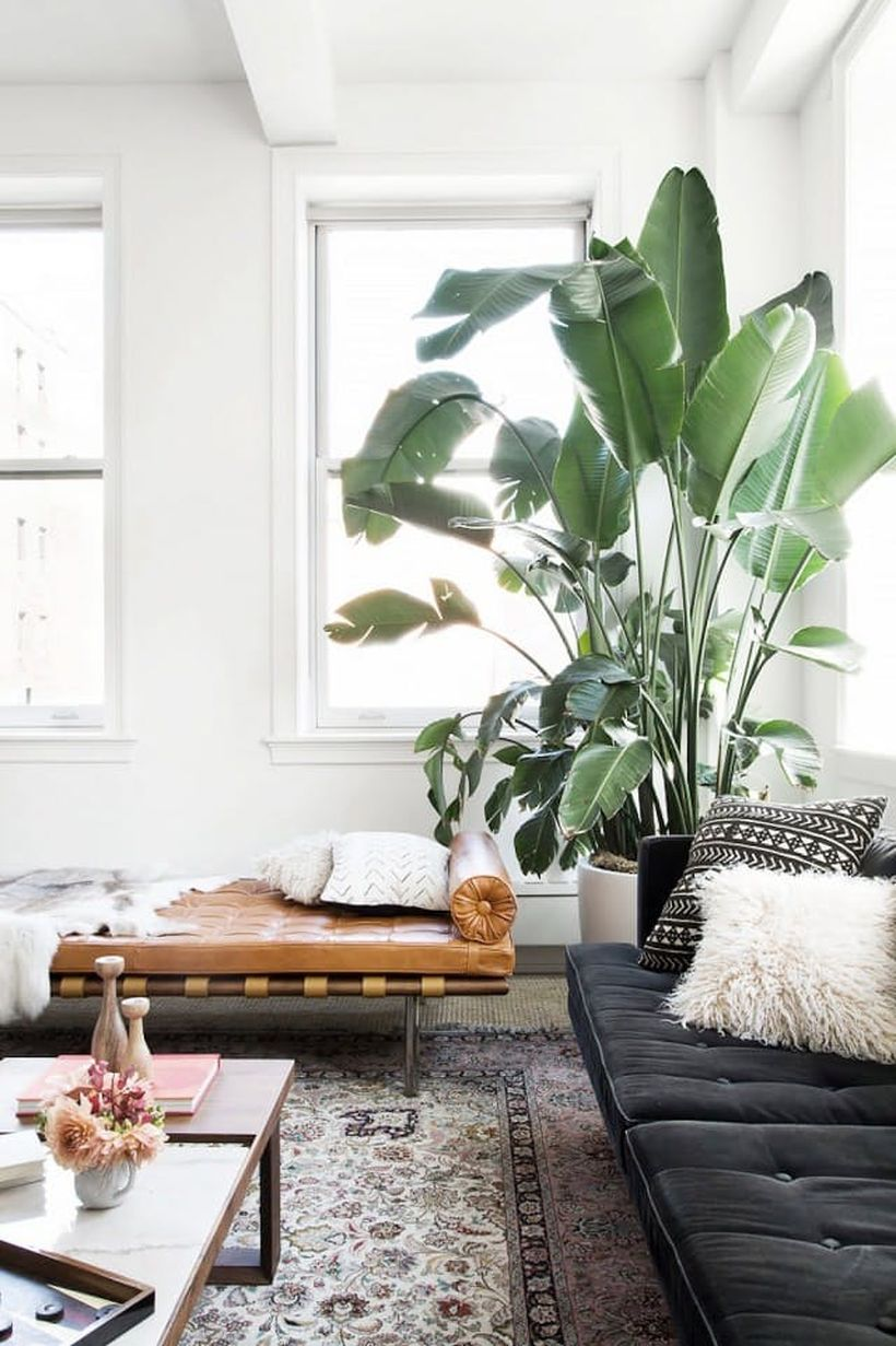 Why plants in the apartment –  indoor plants for apartments