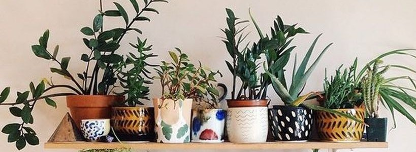 best indoor plants for apartments best indoor plants decor for air purify apartment and home featured CKPIQBG