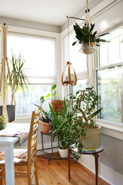 best indoor plants for apartments best indoor plants low light tags foot bird of paradise indoor indoor AKVIOPM