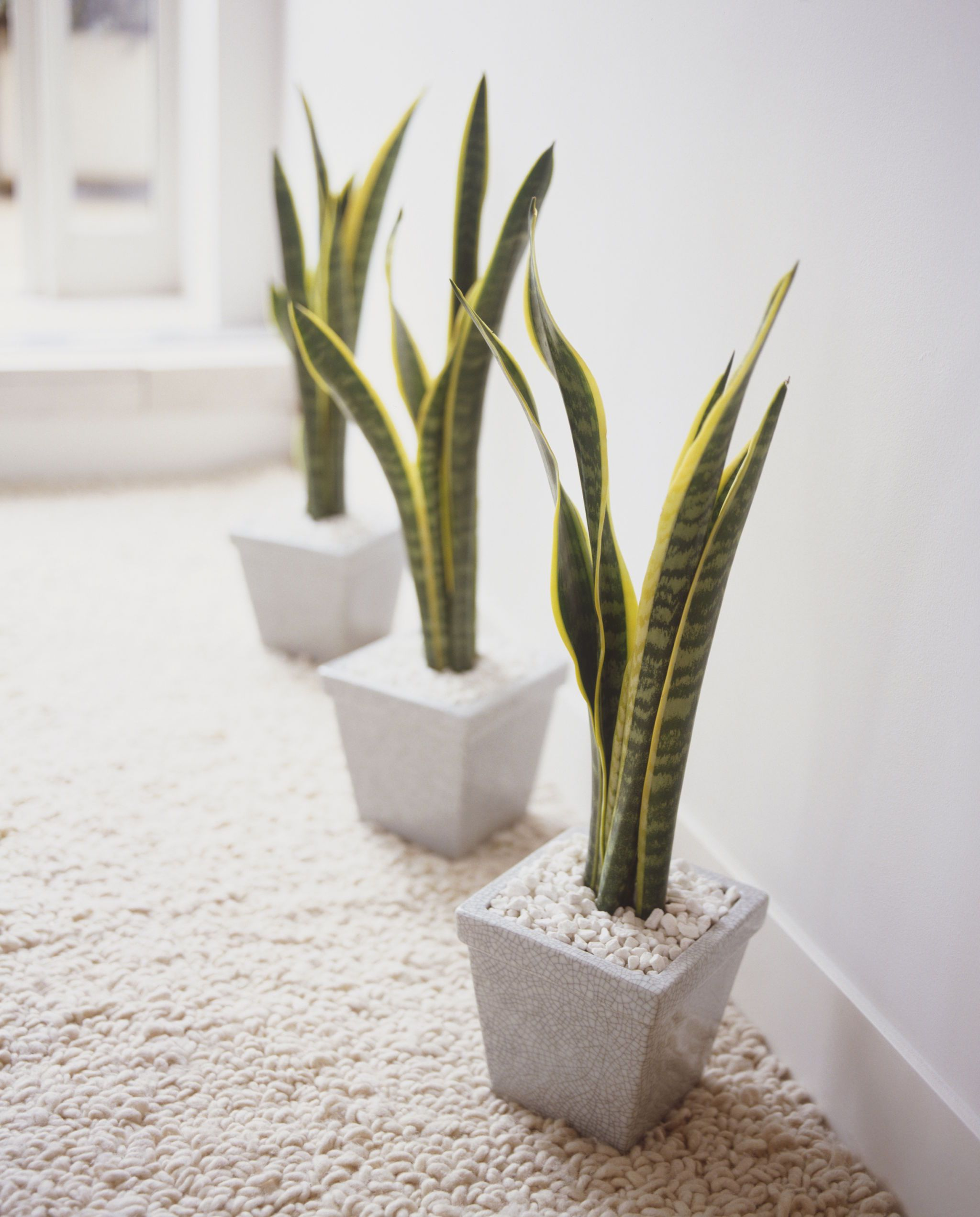 best indoor plants for apartments best indoor plants PNRASNJ