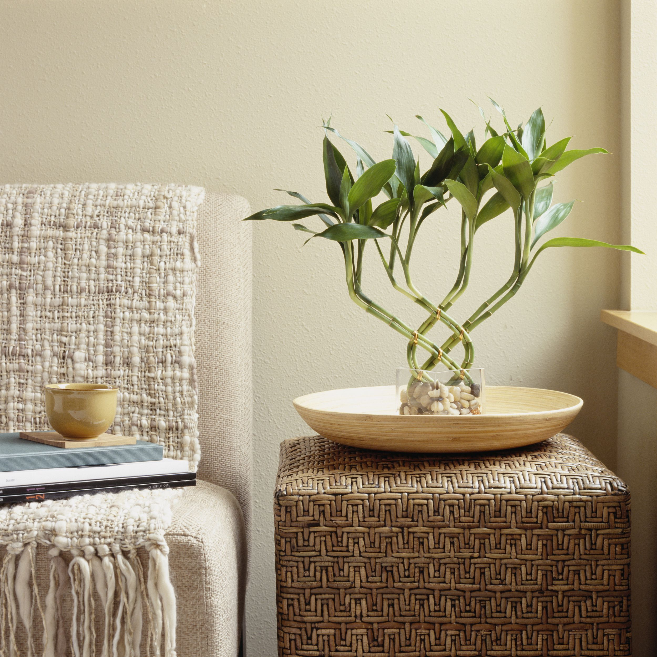best indoor plants for apartments best indoor plants RCWXCJX