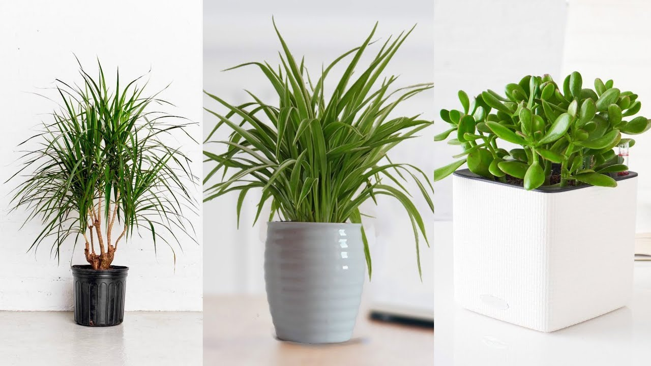 best indoor plants for apartments top 8 best indoor plants for apartment living ANRPZOZ