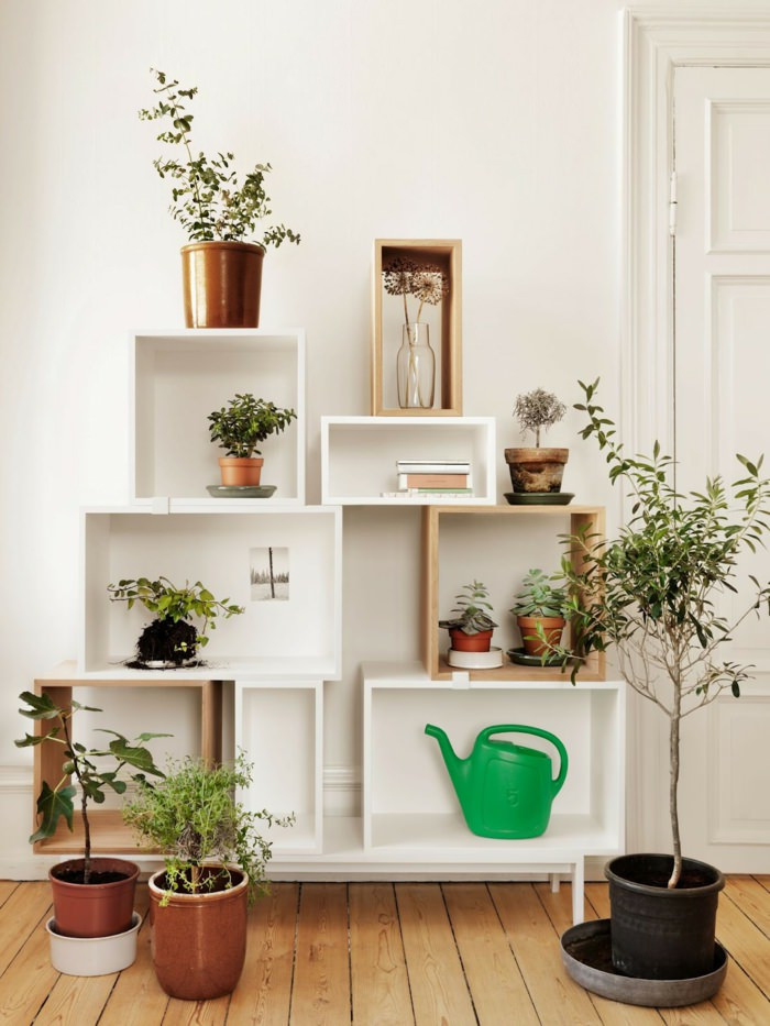 Indoor plants decoration 3. house plants home ideas (4) MTSMUNY