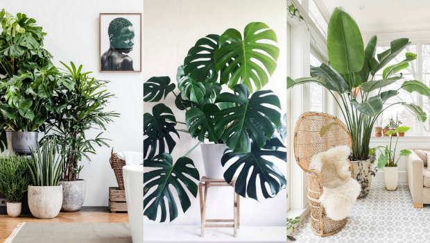 Indoor plants decoration a list of the best indoor plants for fabulous home decor VLHARBJ