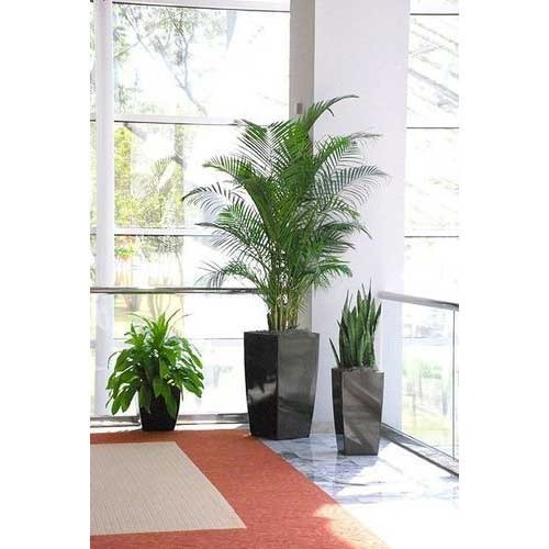 Indoor plants decoration corporate office decoration plant KNDCQZR
