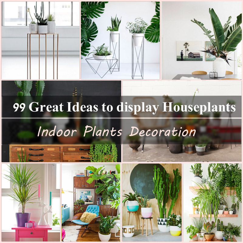 Indoor plants decoration indoor plants decoration makes your living space more comfortable,  breathable, and ZDGMJCZ