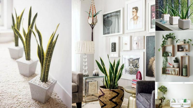 Indoor plants decoration now pick which plant goes best with your home décor and preserve VHHPLFH