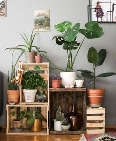 indoor plants ideas 64+indoor plant ideas to beauty your small home NHAZAQG