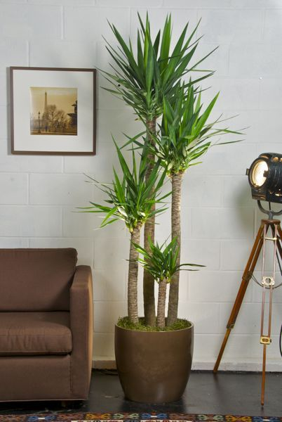 indoor plants ideas 99 creative ways to include indoor plants in your home creative indoor QCORUUG
