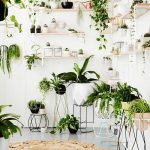 Plant trends for Inside – indoor plants ideas