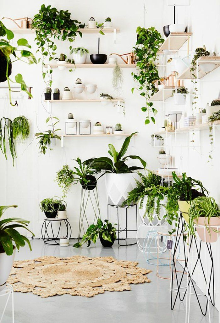 indoor plants ideas 99 houseplants display ideas ICASXKP