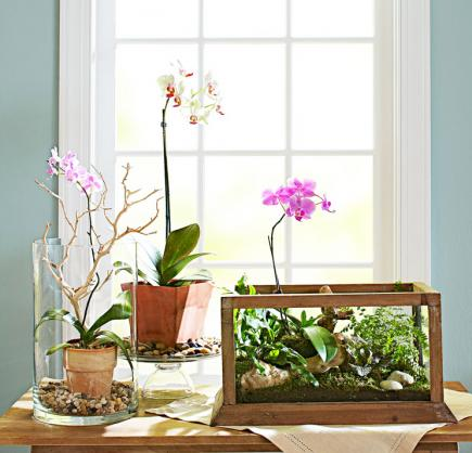 indoor plants ideas orchid options FHXQBDD