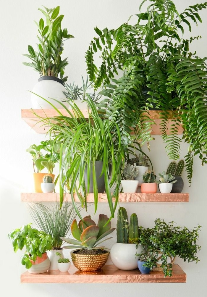 indoor plants ideas use shelves in your home to keep the plants on it. there ONWUMNC